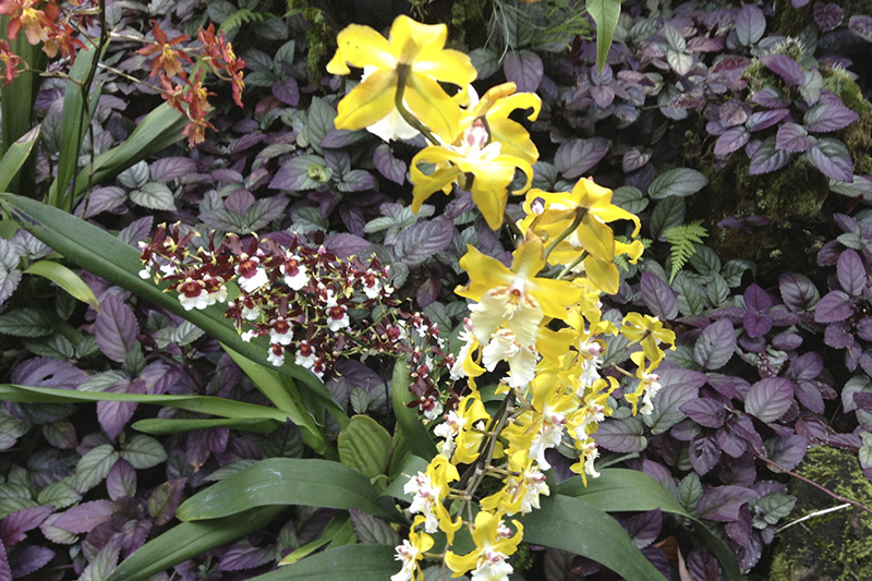 Beautiful orchids can be seen during your Hawaii vacations